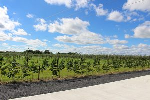 mulrines-orchard.jpg